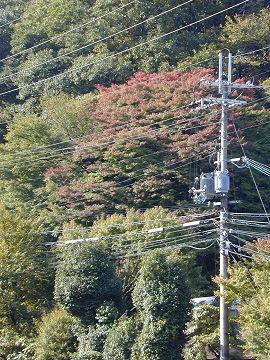 逢坂山の紅葉2005