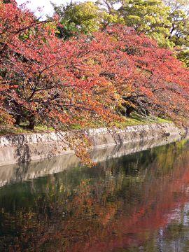 奈良線稲荷駅の紅葉(1)
