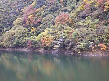 宇治川ラインの紅葉(1)