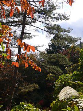 比良山ふもとの紅葉(1)