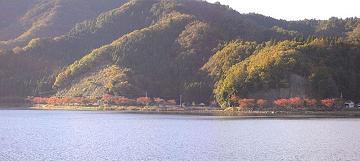大浦から望む桜並木