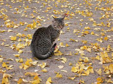 膳所神社の野良猫