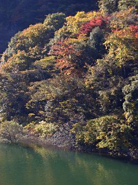 宇治川ラインの紅葉(4)