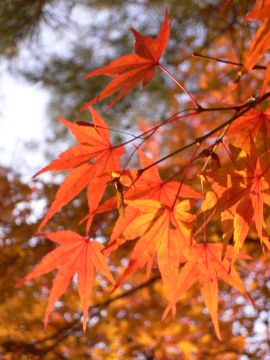 南禅寺の紅葉(1)