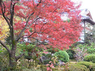 眞乘院の紅葉