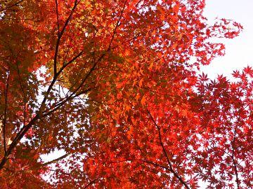 南禅寺周辺の紅葉