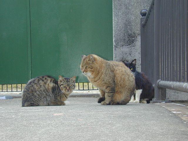 木屋町の猫