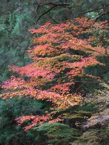 高野山の紅葉(2)/2006
