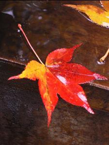 高野山の紅葉(1)/2006