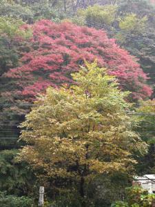 逢坂山の紅葉/2006