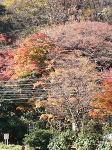 続・逢坂山の紅葉/2006