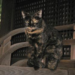 藤森神社の猫