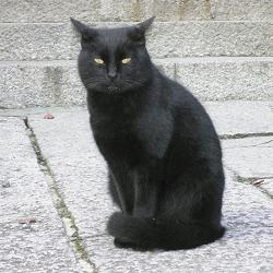 藤森神社の黒猫