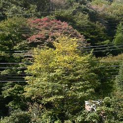 逢坂山の紅葉