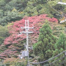 続・逢坂山の紅葉