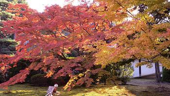 隨心院の紅葉
