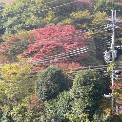 新・逢坂山の紅葉