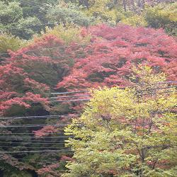 逢坂山の紅葉・了
