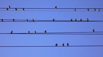 小鳥の五線譜