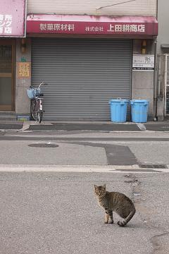 恵美須町駅裏の猫の画像