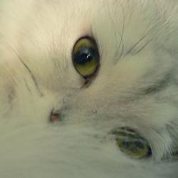 猫のポートレイトの写真