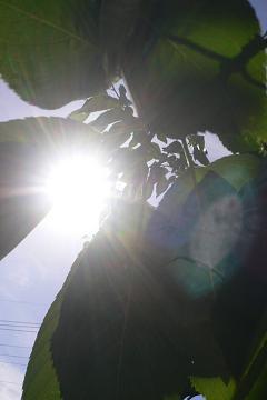 桜~2010年初夏の写真