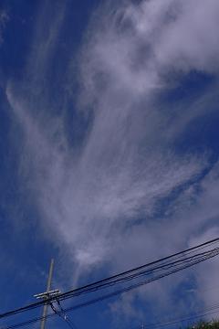 """雨上がりの朝にの写真"""""""