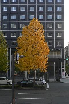 """秋色の街路樹の写真"""""""