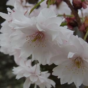 植藤造園の御信の写真