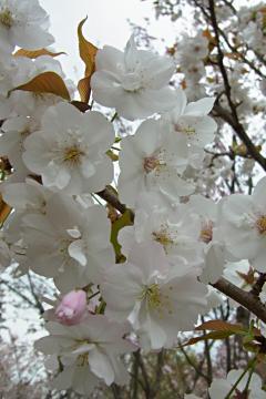 植藤造園の佐野の写真