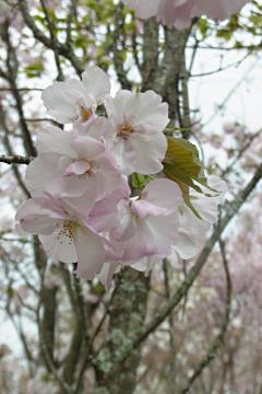 植藤造園の桐ヶ谷の写真(1)