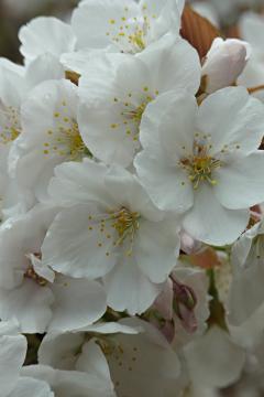 植藤造園の有明の写真