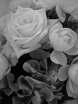 幸福の薔薇の写真