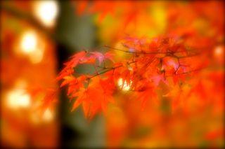 秋色の写真