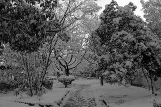 残雪の写真