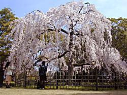 京都御苑(1)