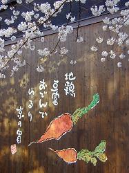 高瀬川の桜(5)