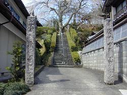 雲源寺の枝垂桜(1)