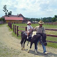 ポニー体験乗馬