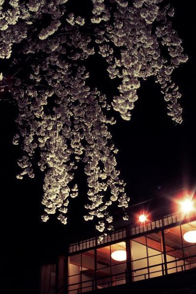 祇園白川の夜櫻